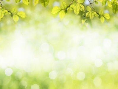 licht door de bladeren