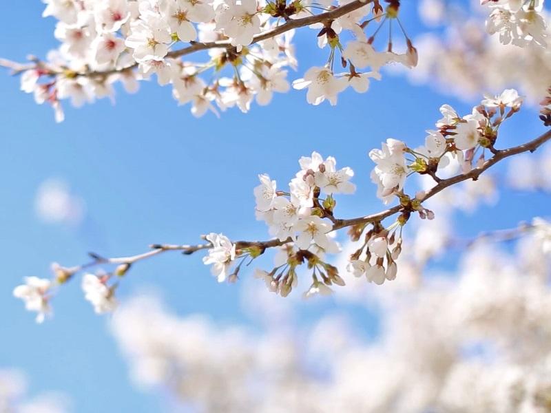 daar is de lente op 21 maart